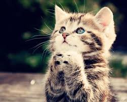 Kitten praying